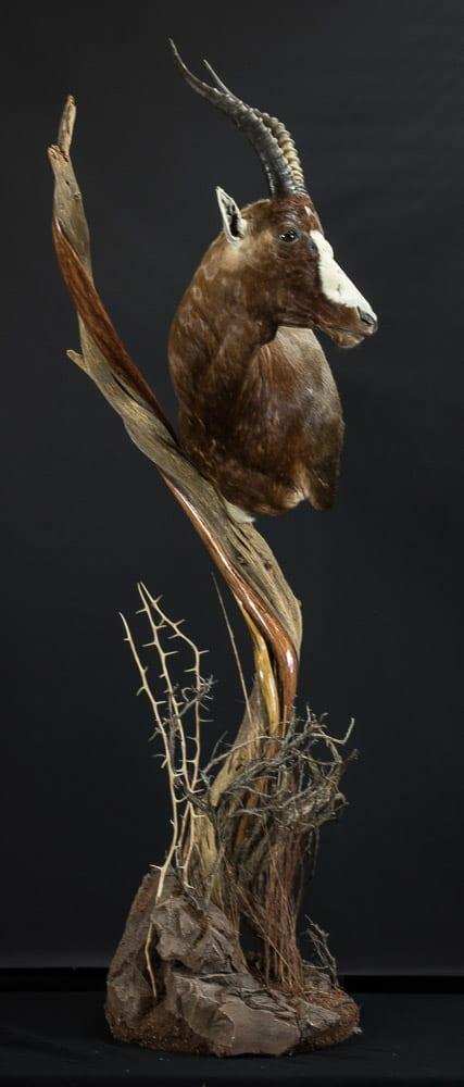 Blesbuck - 2018