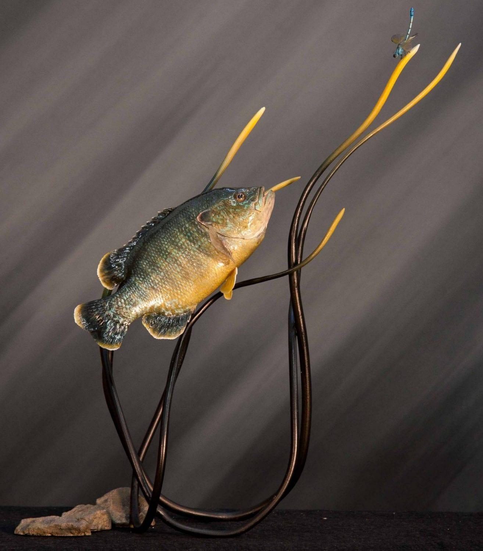 Sunfish - 2014