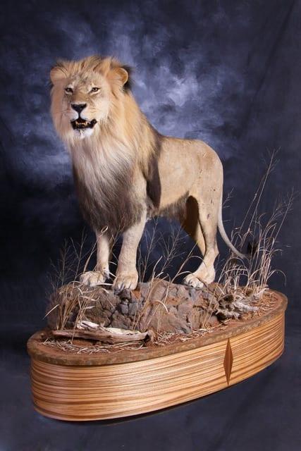 Lion - 2012